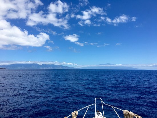 Maui Dive Shop: photo0.jpg