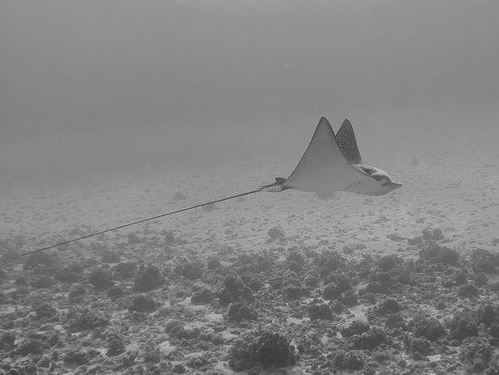 Maui Dive Shop: photo1.jpg