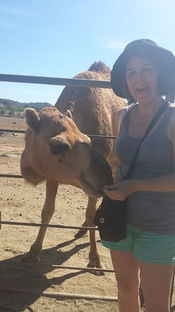 Ramona, Californië: Feeding the camel
