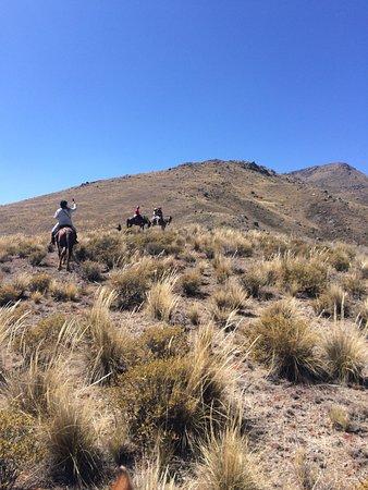 Colca Horse El Herraje Photo