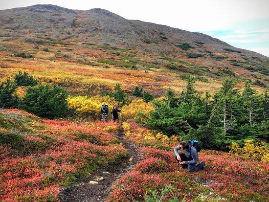 Ninilchik, Αλάσκα: Kenai Backcountry Adventures