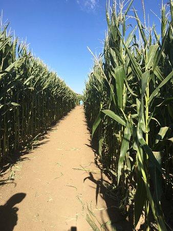 Lathrop, Califórnia: Dell'Osso Family Farms