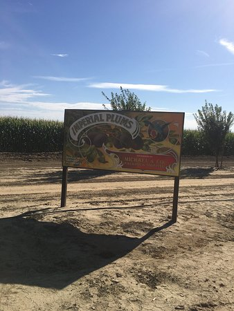Lathrop, CA: Dell'Osso Family Farms