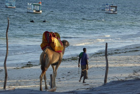 Nyali Beach: Camel Rides near Nyali and Bamburi Beach Mombasa
