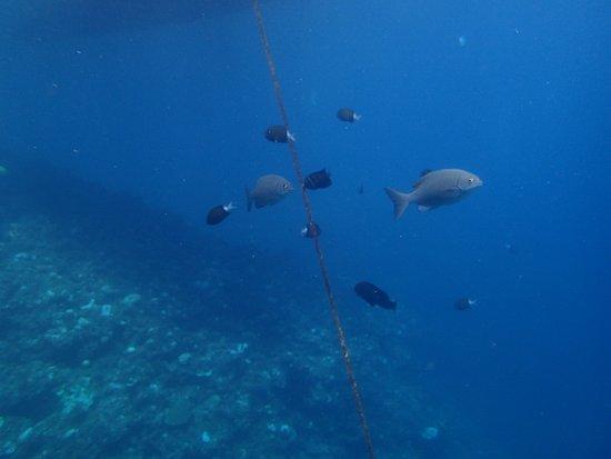 Sky Reef Divers