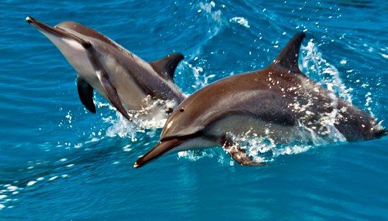 Piti, Ilhas Marianas: フィッシュアイ  イルカウォッチングツアー