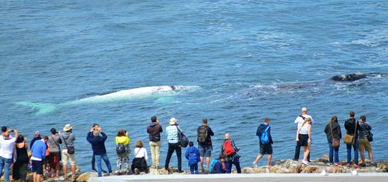Херманус, Южная Африка: Whale watching - our view from inside