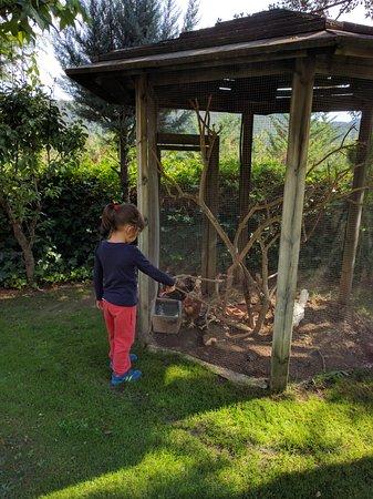 Borreda, สเปน: Gallinas en el jardín delantero