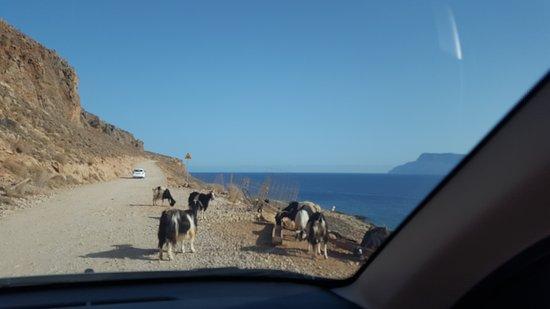 Kaliviani, Grecia: 20161010_095822_large.jpg