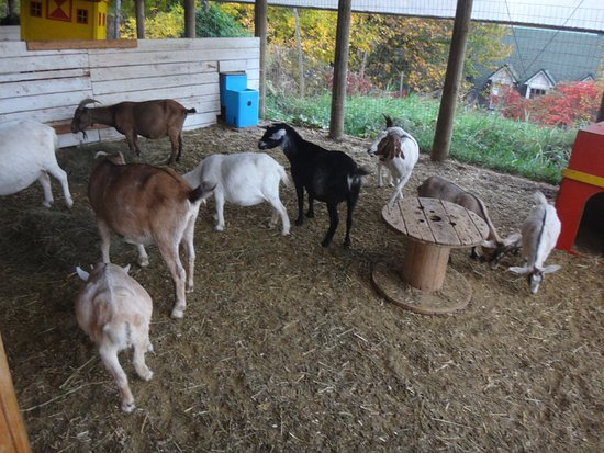 Saint-Eustache, Canada: Farm animals