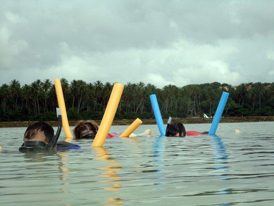 إلها دي بويبيبا: Snorkel nas Piscinas Naturais de Tassimirim