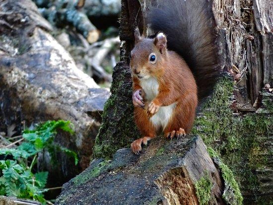 Lockerbie, UK: Nuts carefully wedged between the tree trunk-thankyou very much