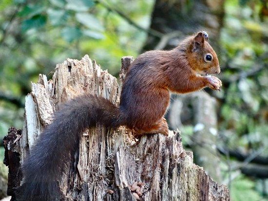 Lockerbie, UK: The same squirrel