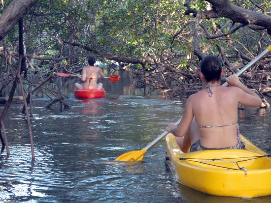 Ecoturismo Marinho - Boipeba: Passeio de caiaque nos túneis do mangue