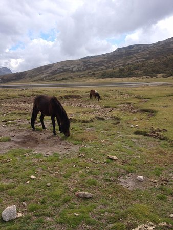 Haute-Corse, Francia: chevaux sauvages