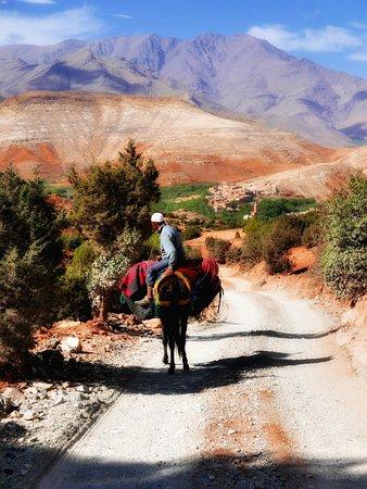 Berber Travel Adventures: Mohamed et sa mule ...