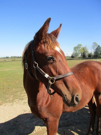 Nicholasville, KY: 2016 Weanling at Taylor Made Farm