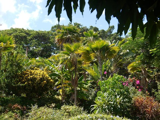 Hale Huanani Bed and Breakfast: Part of the garden