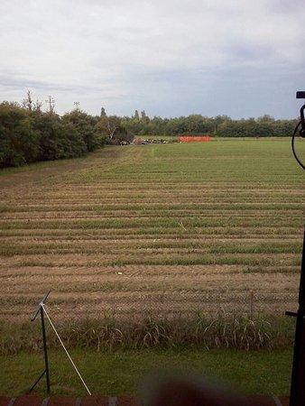 Agriturismo Borgo Borromeo: Panorama bucolico al risveglio