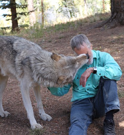 Divide, CO: Wolf Kiss