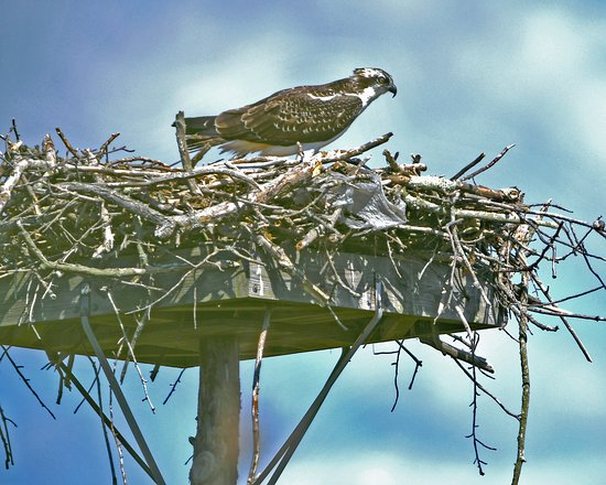 Audubon Society  Environmental Education Center