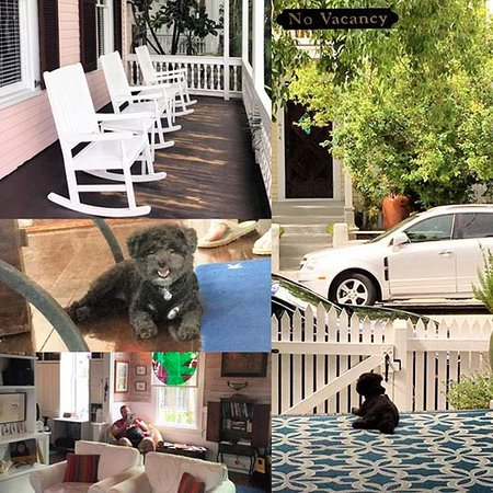 Key West Bed and Breakfast: welcoming by sweet Lulu the poodle