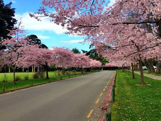 Victoria Esplanade Gardens