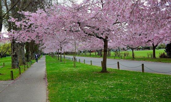 Victoria Esplanade Gardens: Great Gardens!