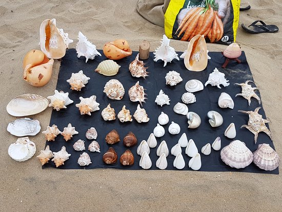 Covelong, India: Sea shelsl display I saw on the beach