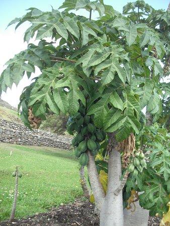 Pumapungo Museum and Arqueological Park - MCYP : Plantas de origen autóctono