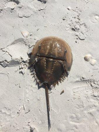 Vanderbilt Beach, FL: photo3.jpg