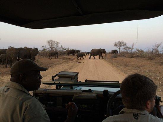 Lukimbi Safari Lodge: Traffic jam inKruger