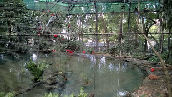 Animals And Plants Park Picture Of Hong Kong Zoological And Botanical Gardens Hong Kong