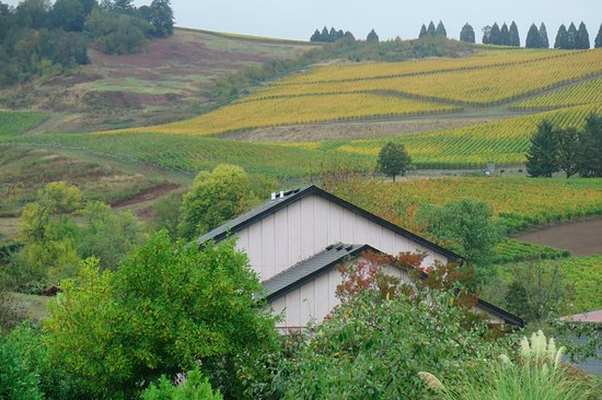 Salem, OR: Autumn patchwork in the vines