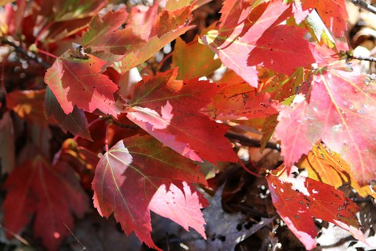 Honey Harbour, Canada: fall colour at park