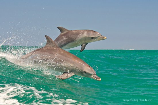 Swim with dolphins at Rockingham Wild Encounters - Picture of The