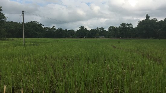 Nature Hunt Eco Camp, Kaziranga: photo5.jpg