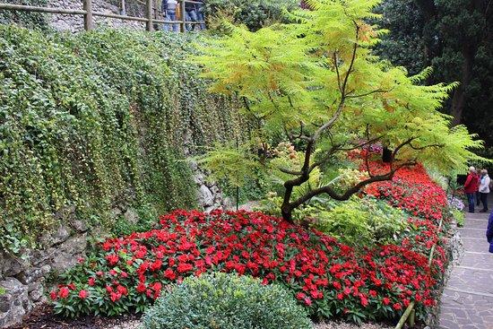 Fiori e piante foto di parco grotta cascata varone for Piante e fiori