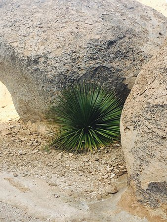 Deming, Nuevo Mexico: photo0.jpg