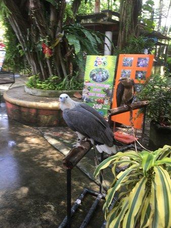Phuket Zoo - Picture of Phuket Zoo, Phuket - TripAdvisor