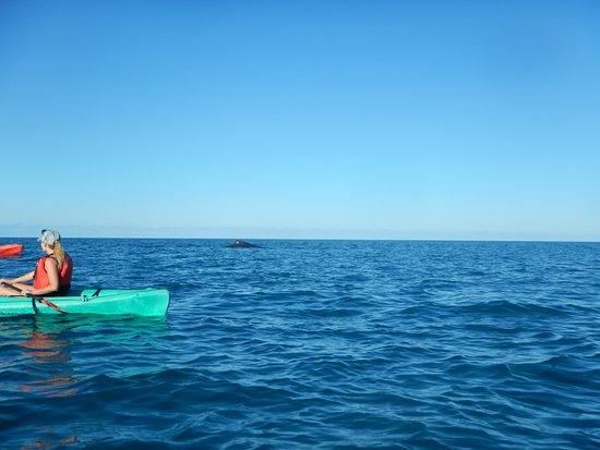 Paddletrek Kayak Adventures: balena in vista.....