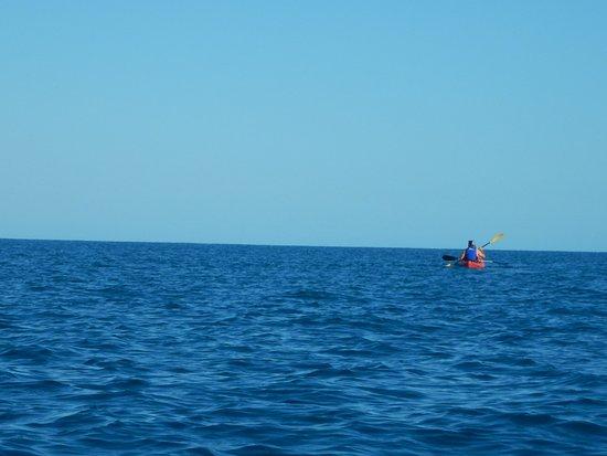 Paddletrek Kayak Adventures: balena dove sei????
