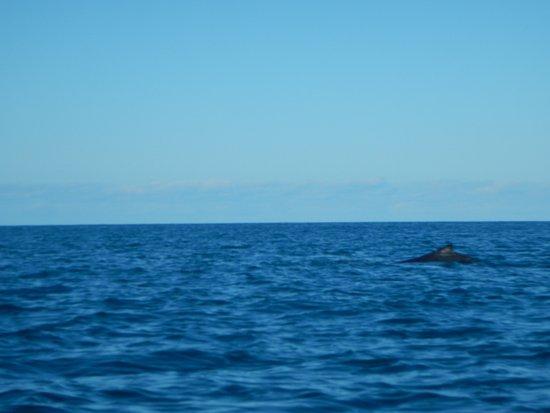 Paddletrek Kayak Adventures: balena