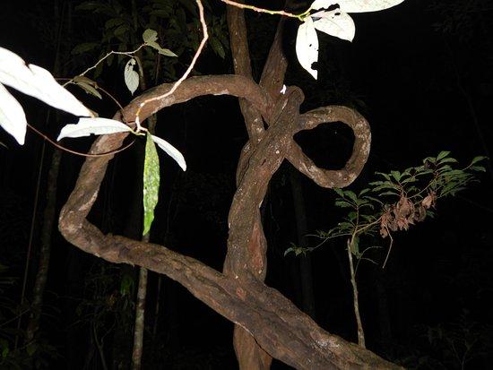 Jungle Adventures Night Walk : alberi della foresta