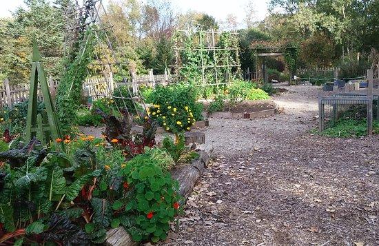 Matthaei Botanical Gardens: Some of the raised beds in the children's garden