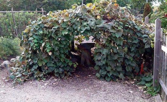 Matthaei Botanical Gardens: A little hideaway