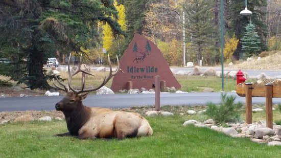 Idlewilde by the River: Bull Elk outside the front door of the cabin