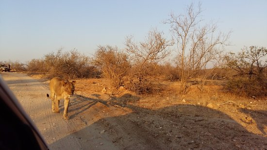Balule Nature Reserve, Sudáfrica: activities: game drive
