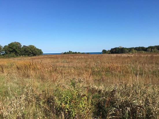 Lake Forest, IL: Fort Sheridan forest reserve facing lake