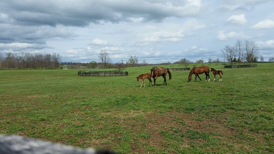Rabbit Creek Bed and Breakfast: One of the thoroughbred horse farms near Rabbit Creek Bed & Breakfast
